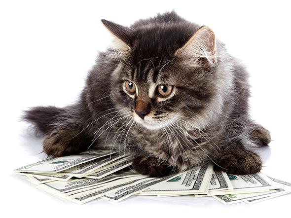האם חתול יכול להיות יורש?
