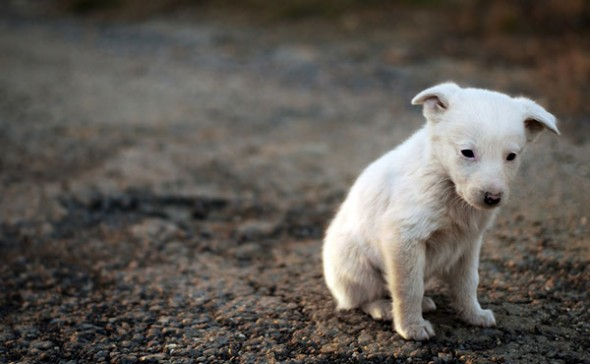 חוק צער בעלי חיים ואני